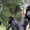 Imagem 17 do filme Virunga