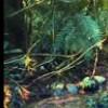 Imagem 13 do filme El Ardor
