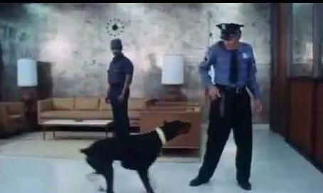 Imagem 3 do filme A Gangue dos Dobermans