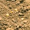 Imagem 14 do filme A Ilha do Milharal