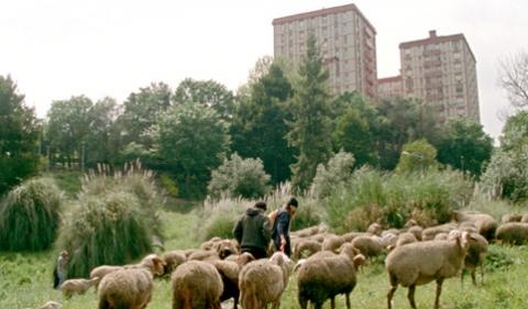 Imagem 2 do filme As Mil e Uma Noites: Volume 2, O Desolado
