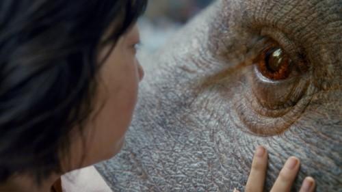 Imagem 5 do filme Okja