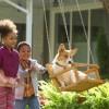 Imagem 5 do filme Quatro Vidas de Um Cachorro