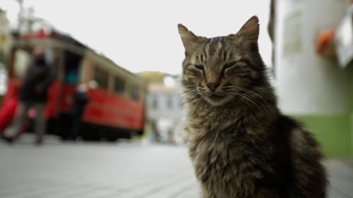 Imagem 4 do filme Gatos