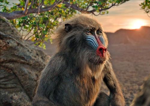 Imagem 4 do filme O Rei Leão