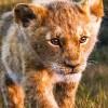 Imagem 9 do filme O Rei Leão
