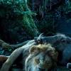Imagem 11 do filme O Rei Leão