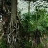 Imagem 10 do filme Zama