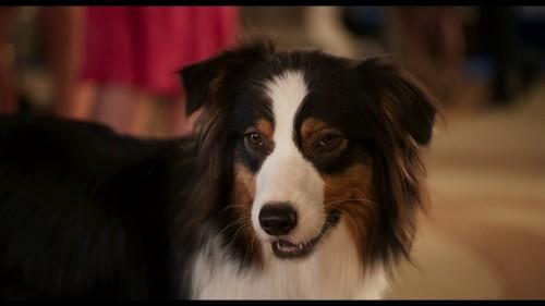 Imagem 5 do filme Show Dogs - O Agente Canino