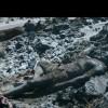 Imagem 2 do filme A Pele Fria