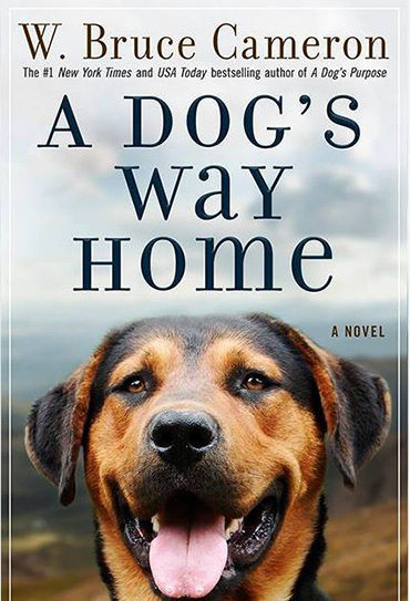 Assistir A Dog's Way Home 2019 Torrent Dublado 720p 1080p Online