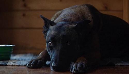 Imagem 2 do filme A Bruxa da Casa ao Lado