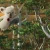 Imagem 5 do filme OUTBACK – Uma Galera Animal