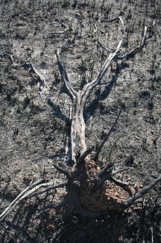 Imagem 3 do filme Vale dos Esquecidos