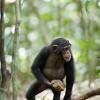 Imagem 4 do filme Chimpanzé