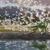 Imagem 9 do filme O Bom Dinossauro