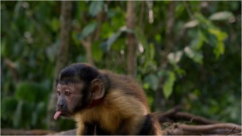 Imagem 5 do filme Amazônia