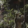 Imagem 11 do filme Amazônia