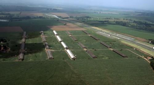 Imagem 2 do filme A galinha que burlou o sistema