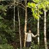 Imagem 4 do filme A Floresta de Jonathas