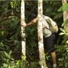 Imagem 6 do filme A Floresta de Jonathas