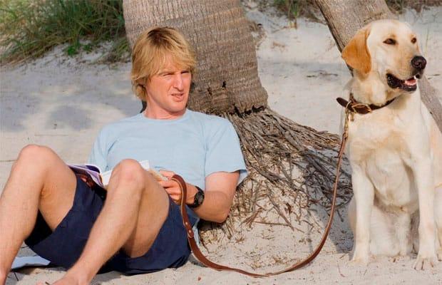 Os Melhores Filmes sobre Cachorros