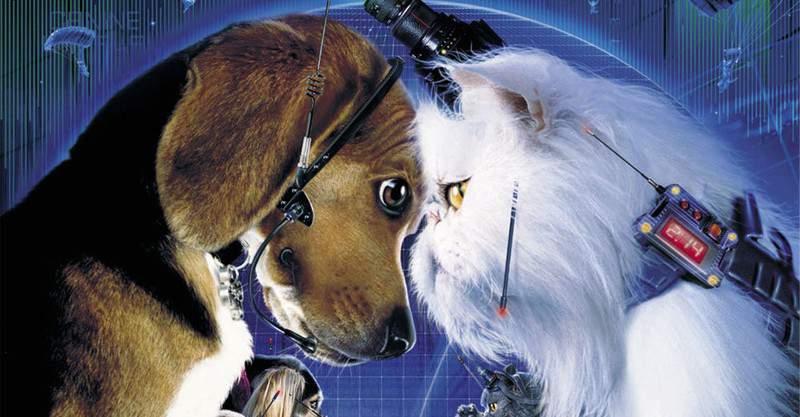 Como Cães e Gatos 3 está em desenvolvimento pela Warner Bros.