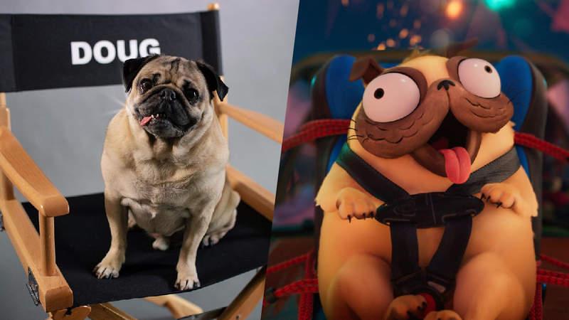 Doug, cão-celebridade, fez sua estreia como dublador em filme da Sony/Netflix