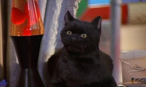 Imagem 1 do filme Sabrina, a Aprendiz de Feiticeira