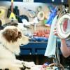 Imagem 1 do filme Stan, o Cão Blogueiro
