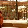 Imagem 14 do filme Saramandaia