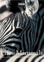 Poster do filme The Life of Mammals