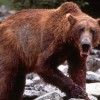 Imagem 15 do filme The Grizzly Man Diaries