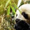 Imagem 8 do filme Wild China