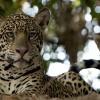 Imagem 5 do filme Wild Brasil
