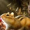 Imagem 18 do filme Hidden Kingdoms